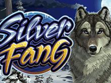 Крупные выигрыши в Silver Fang — новом аппарате от Microgaming